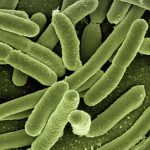 antibacterial-category